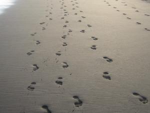 footprints-186771_640